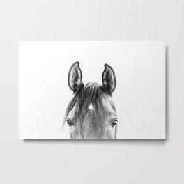 peekaboo horse, bw horse print, horse photo, equestrian print, equestrian photo, equestrian decor Metal Print