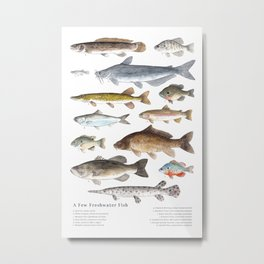 A Few Freshwater Fish Metal Print