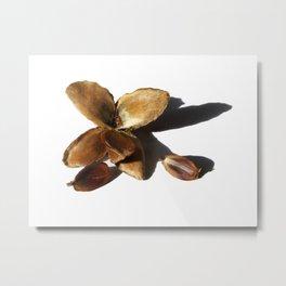 autumn beech nuts Metal Print