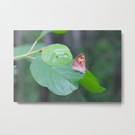 Butterfly hanging out on a leaf Metal Print