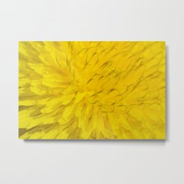 Dandelion flower in extreme close up. Metal Print