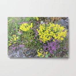 flowering rockeries Metal Print
