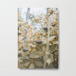 Foraging Metal Print