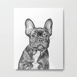 French Bulldog Puppy Digital Portrait Drawing Metal Print