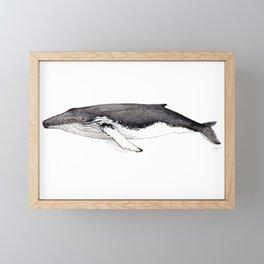 North Atlantic Humpback whale Framed Mini Art Print