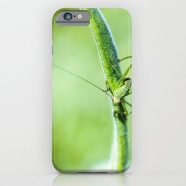 Common green cricket insect on branch iPhone Case