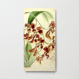 Cyrtochilum serratum Metal Print