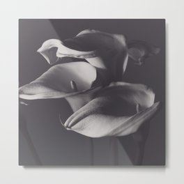 Calle lilies, photo, fine art, three flowers photography, still life, nature lover, Robert Mappletho Metal Print