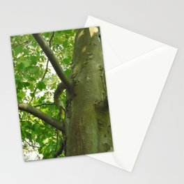 Sycamore Tree Underside Stationery Cards