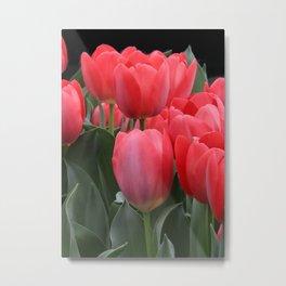 Signs of Spring Pink Tulips Metal Print