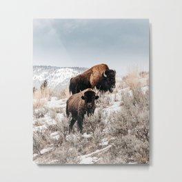 Bison Bulls in Yellowstone Metal Print