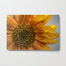 Sunflower in red Metal Print