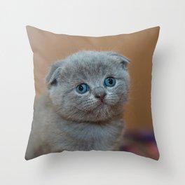 Cat_20180102_by_JAMFoto Throw Pillow