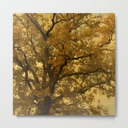 Autumn Massive Tree Yellow Metal Print