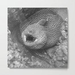 Coiled fat eel Metal Print