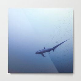 Thresher shark in the blue Metal Print