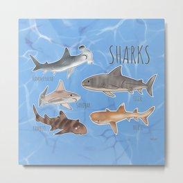 Sharks! Metal Print
