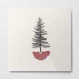 Fir Pine Metal Print