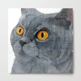 Blue British Shorthair cat Metal Print