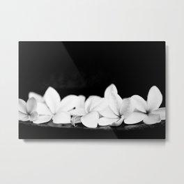 Singapore White Plumeria Flowers the Fragrance of Hawaii Metal Print