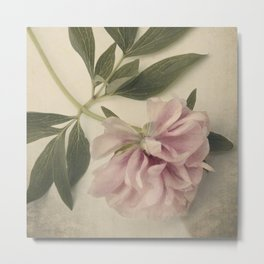 Scents of Spring - Pink Peony ii Metal Print
