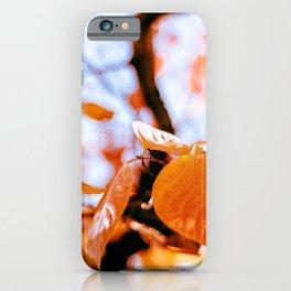 Autumn red foliage iPhone Case
