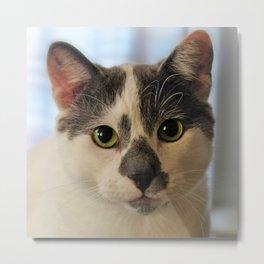 Cute Cat Metal Print