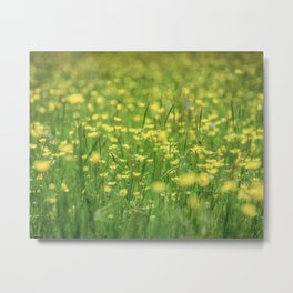 Buttercup Meadow Metal Print