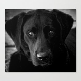 Loyalty  Black Lab  Canvas Print