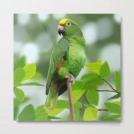 Yellow-Headed Amazon Parrot Metal Print