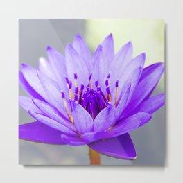 Blue Lotus In Bloom Metal Print