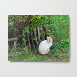 Mirabella the White Cat Metal Print