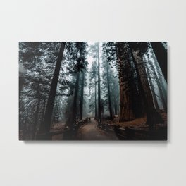 Lost in the Foggy Forest Metal Print