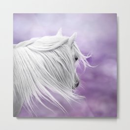 Lavender dream Metal Print