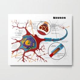 Diagram of a Typical Myelinated Vertebrate Motor Neuron Metal Print