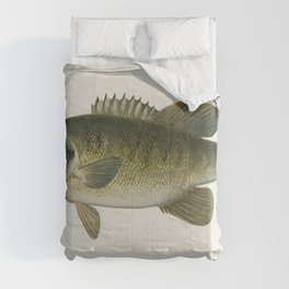 Small-Mouthed Black Bass( Micropterus Dolomieu) illustrated by Sherman F Denton (1856-1937) from Gam Comforters