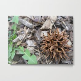 Sweetgum Tree Ball Metal Print