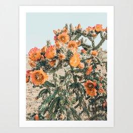 Cholla, Orange Flowering Cactus Art Print