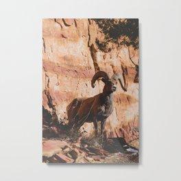 Zion Bighorn Sheep Metal Print