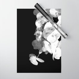 White Orchids Black Background Wrapping Paper