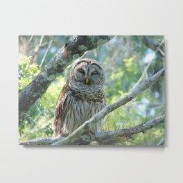 Smiling Owl Metal Print