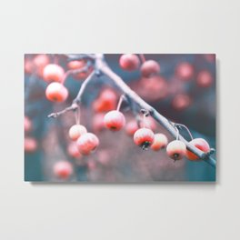 Winter Berries 2 Metal Print