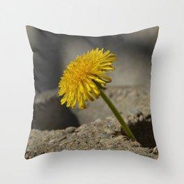 Dandelion That Grew From Concrete Throw Pillow