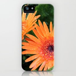 Orange Gerber Daisies in Bloom iPhone Case