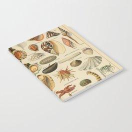 Vintage sealife and seashell illustration Notebook