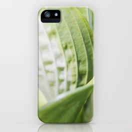 Hosta 5 iPhone Case