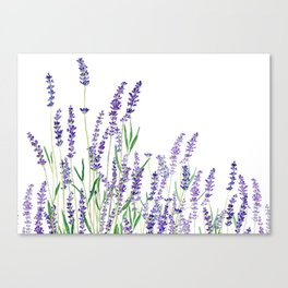 lavender watercolor horizontal Canvas Print