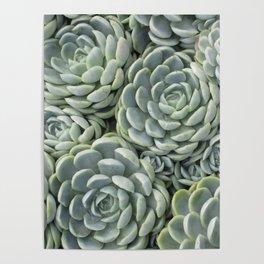 Pale Green Succulent Garden Poster