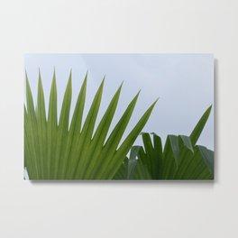 Tropical Palm Fan Metal Print