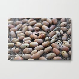 Acorns with Holes No.4 Metal Print